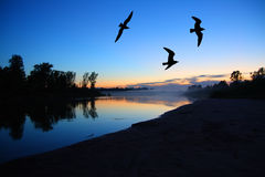 River dusk landscape with gulls Royalty Free Stock Images