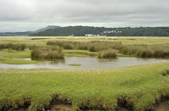 Portmeiron village on the River Dwyryd Estuary. The River Dwyryd Estuary with grazing salt-marsh lambs and Portmeirion Village Gwynedd in North Wales, UK Stock Images