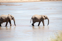 On the river. Elephant family looking at the cooling water Stock Photo