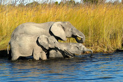 River Ellies Royalty Free Stock Photo