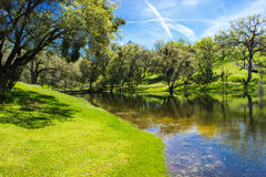 River Emptying Into Small Pond Surrounded By Oak Trees. Small Pond In Sierra Foothills Reflecting Surrounding Oak Trees With Bridge Stock Photography