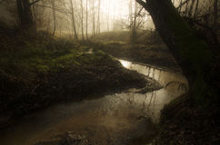 River in enchanted fairytale forest Stock Photography