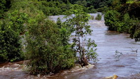 River in Equatorial Guinea, Jungle, Africa. Tropical river floods the African jungle, close-up, Equatorial Guinea. Rapid River in tropical jungle. Equatorial stock video