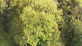 Aerial view of a forest in the alps of Austria stock footage