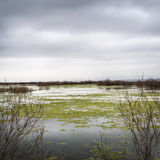 River of Evros in Autumn. Daylight Stock Photos