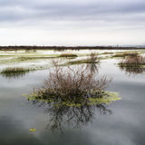 River of Evros in Autumn. Daylight Royalty Free Stock Image