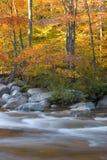 River and fall foliage. Fall foliage along the Pemigewasset River Stock Photo
