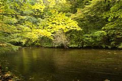 River through fall forest Royalty Free Stock Photography