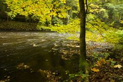 River through fall forest Stock Photo