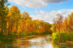 River in the fall Royalty Free Stock Photos