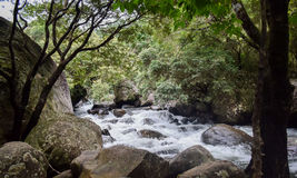 River Falls. A mountain river flowing through stones Stock Images