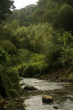 River through Fiji highlands Stock Image