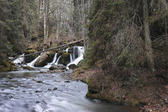 River in the fir forest Stock Photography