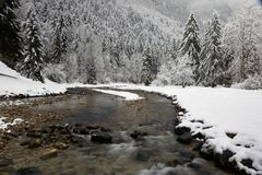 River and firs. In a winter landscape of French Alps royalty free stock photos