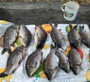 River fish Stock Image