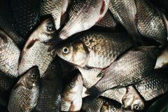 River fish background Stock Image