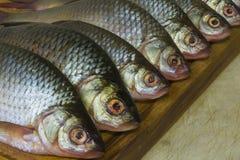 River fish on the blackboard royalty free stock photo