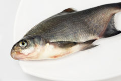 River fish bream Stock Photo
