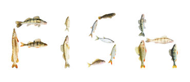 River fish collection isolated Stock Images