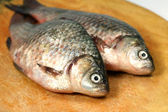 River fish  crucian ( carp ) Stock Image
