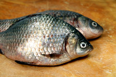 River fish  crucian ( carp ) Stock Photography