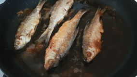 River fish frying on pan close up, dynamic scene, toned video. Delicious fresh food in the process of cooking stock footage