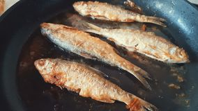 River fish frying on pan close up, dynamic scene, toned video. Delicious fresh food in the process of cooking stock video
