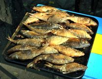 River fish after hot Smoking Golden color royalty free stock photos