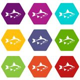 River fish icon set color hexahedron. River fish icon set many color hexahedron isolated on white vector illustration Stock Photography
