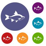 River fish icons set. In flat circle reb, blue and green color for web Stock Image