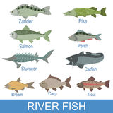 River Fish Identification Slate With Names Stock Images