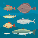 river fish. Set of freshwater sea cartoon fishes. Fauna ocean vector illustration.  Royalty Free Stock Images