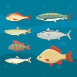 river fish. Set of freshwater sea cartoon fishes. Fauna ocean vector illustration.  Stock Photography