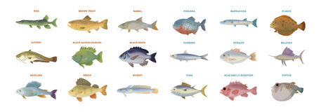 River fish set. Isolated fish on white background Stock Photos