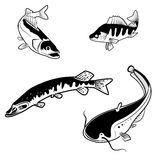 River fish Royalty Free Stock Images