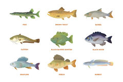 River fish set. Royalty Free Stock Images