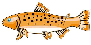 River fish trout Royalty Free Stock Image