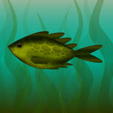 River fish. Under the water. Underwater plants. River fish - Under the water - Underwater plants - Turbid water - Vector illustration Royalty Free Stock Image