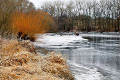 River with floe and golden willow Royalty Free Stock Photography