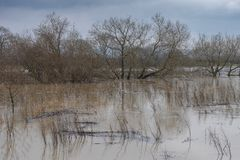 River in flood. Rivers Rother and Arun in flood at Pulborough West Sussex England Royalty Free Stock Image