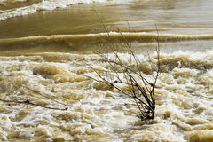 River in flood after several days of rain.  royalty free stock image