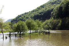 River flood in the spring valley of Cerna river. River flood trees in the valley of Cerna river, Romania Stock Photo