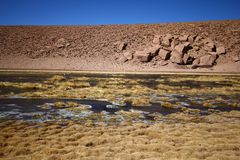 River flow in the Atacama desert Stock Photo
