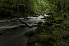 River Flow. A river flows, deep in the forest Royalty Free Stock Images