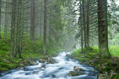 River flow in a misty forest Stock Photography