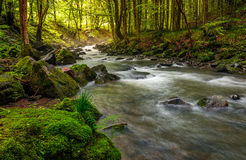 River flow in sunny forest at sunrise. Stones covered with moss lay on the shore. beautiful summer background Stock Image