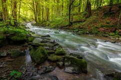 River flow in sunny forest at sunrise. Stones covered with moss lay on the shore. beautiful summer background Royalty Free Stock Image