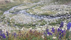 The river after the flowers. The river after the purple flowers in high mountain area royalty free stock photo