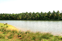 River flowing. Through tropical area Stock Images