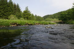 River Flowing. A landscape view of a river flowing with pine trees in the background - photo taken near glendevon, scotland Stock Photo
